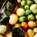 квашеные зеленые томаты