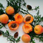 абрикос с косточками-ядрышками