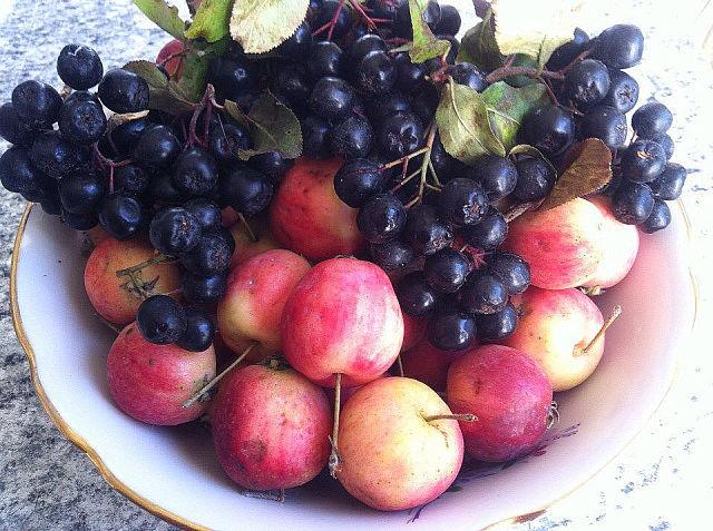 рябина и яблоки