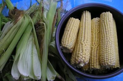 konseervirvannaya-kukuruza